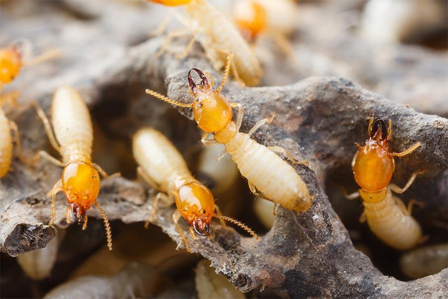 防蟻・シロアリ